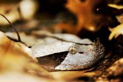Ocultación de la serpiente Fotos de archivo