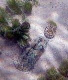 Ocultación de la tortuga de almizcle Imágenes de archivo libres de regalías