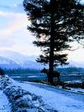 Ocultación de los alces de Alaska imagenes de archivo