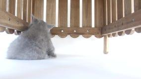 Ocultación de los gatitos almacen de metraje de vídeo