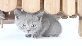 Ocultación de los gatitos almacen de video