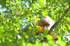 Ocultación del mono Imagen de archivo libre de regalías