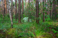 Ocultado en bosque echó la tienda - ejemplo de acampar de la cautela Imagen de archivo