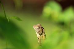 Ocultado en verdes Fotografía de archivo