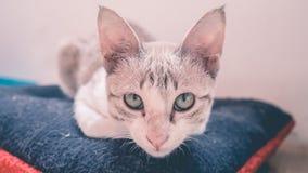 Ocupa do gato no descanso foto de stock royalty free