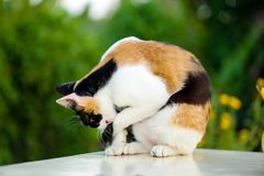 Ocupa do gato relaxada na tabela de mármore branca imagens de stock