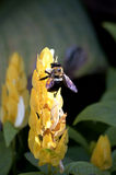 Ocupado como abeja Imagen de archivo