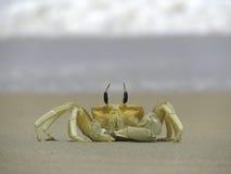 Ocypode Crab in Sri Lanka. Ocypode Crab at the Kalpitiya Beach in Sri Lanka Royalty Free Stock Image