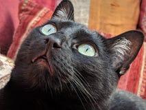 Oczy czarny kot troszkę zdjęcie stock