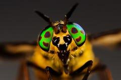 Oczy horsefly Zdjęcia Royalty Free