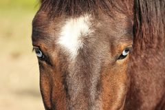 oczy koński dopatrywanie fotografia royalty free