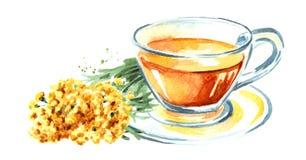 Odödlig buljong eller te Gul blommaHelichrysumarenarium medicinal växt Utdragen illustration för vattenfärghand som isoleras på v stock illustrationer