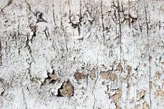 Odłupana popielata pastelowa farba na ścianie jako tekstura Obrazy Stock