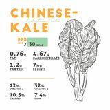 Odżywianie fact Chenese chińczyka lub Kale brokuły, warzywo ilustracja wektor