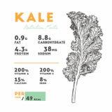 Odżywianie fact Kale, ręka remisu nakreślenia wektor ilustracja wektor