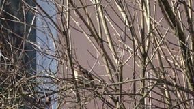 Od życia ptaki zdjęcie wideo