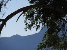 Od drzewa one przyglądają się Obrazy Stock