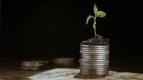 Od garść monet roślina r pojęcie narastająca pomyślność zbiory wideo