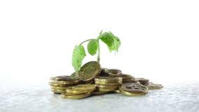 Od garść monet roślina r w deszczu pojęcie narastająca pomyślność zdjęcie wideo