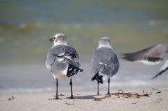 Od plecy: dwa ptaka Obraz Stock