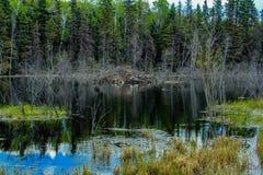 Od pobocza, Jeździecki Halny park narodowy, Manitoba, Kanada zdjęcie stock