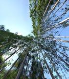Od podstaw widok drzewo Fotografia Royalty Free