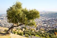 Od wysokości w wioski Morocco drzewie Obrazy Stock