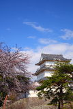 Odawara Castle and cherry blossom Royalty Free Stock Photos