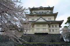 Odawara Castle and cherry blossoms Royalty Free Stock Images