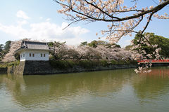 Odawara Castle and cherry blossoms Stock Photography