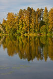 odbić jeziorni drzewa Zdjęcie Stock
