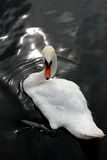 odbicia łabędź wody biel obrazy royalty free
