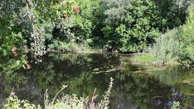 Odbicia drzewa i ulistnienie na załzawionej powierzchni rzeka zbiory