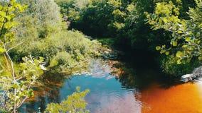 Odbicia drzewa i ulistnienie na załzawionej powierzchni rzeka zbiory wideo