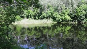 Odbicia drzewa, ulistnienie i wodne leluje, kiwają na załzawionej powierzchni rzeka zbiory