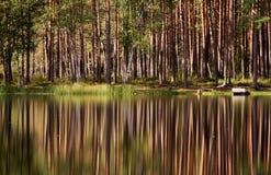 odbicia drzewni Fotografia Royalty Free