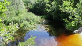 Odbicia gałąź ulistnienie na wodnej powierzchni rzeka i drzewa zbiory
