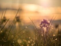 Odbicia i krople rosa na trawie Obraz Stock