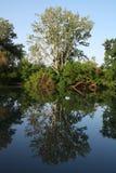 odbicia jeziorny drzewo fotografia stock