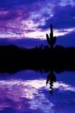 odbicia kaktusowy saguaro Fotografia Royalty Free