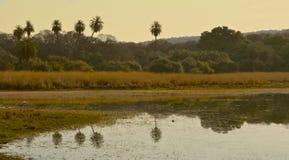 Odbicia w jeziorze przy Ranthambore parkiem narodowym Obraz Royalty Free