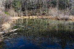 Odbicia w lasu bagnie obrazy stock