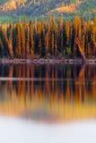 odbicie borealny lasowy jeziorny zmierzch Yukon Zdjęcia Stock