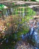 Odbicie chowany staw w lesie obrazy stock
