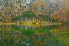 Odbicie drewno w jeziorze Zdjęcie Royalty Free