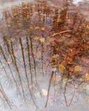 Odbicie drzewa w iWater fotografia stock