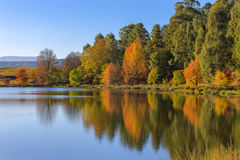 Odbicie drzewa w jesieni Obraz Stock