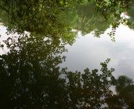 odbicie drzewa w spokojnym jeziorze Fotografia Royalty Free