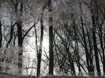 Odbicie drzewa w wodzie Zdjęcie Royalty Free