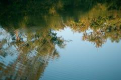 Odbicie drzewo na wodzie obraz royalty free